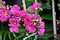 Plant of Thailand - 1.jpg