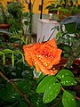 Plants at Bijalinagar 07.jpg