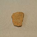 Plaqueta amb gravat geomètric de la cova de la Cocina (Dosaigües), Museu de Prehistòria de València.JPG