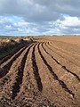 Ploughed field at St Levan - geograph.org.uk - 23633.jpg