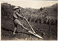 Plowing the Field in Japan (1914 by Elstner Hilton).jpg