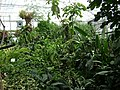 Poland. Warsaw. Powsin. Botanical Garden 119.jpg