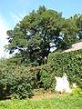 Poltava Botanical garden (45).jpg