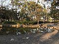 Pond in Hiroshima Central Park.jpg