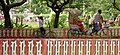 Pondicherry cycle rickshaw (4957411311).jpg