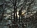Praha, Stodůlky, severní okraj PP U Hájů, zimní slunce.jpg