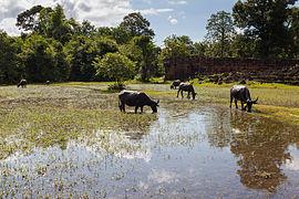 https://upload.wikimedia.org/wikipedia/commons/thumb/a/ab/Pre_Rup%2C_Angkor%2C_Camboya%2C_2013-08-16%2C_DD_02.JPG/