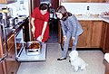 Preparing Thanksgiving Turkey (1964).jpg