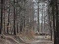 Pri skládke dreva - panoramio.jpg