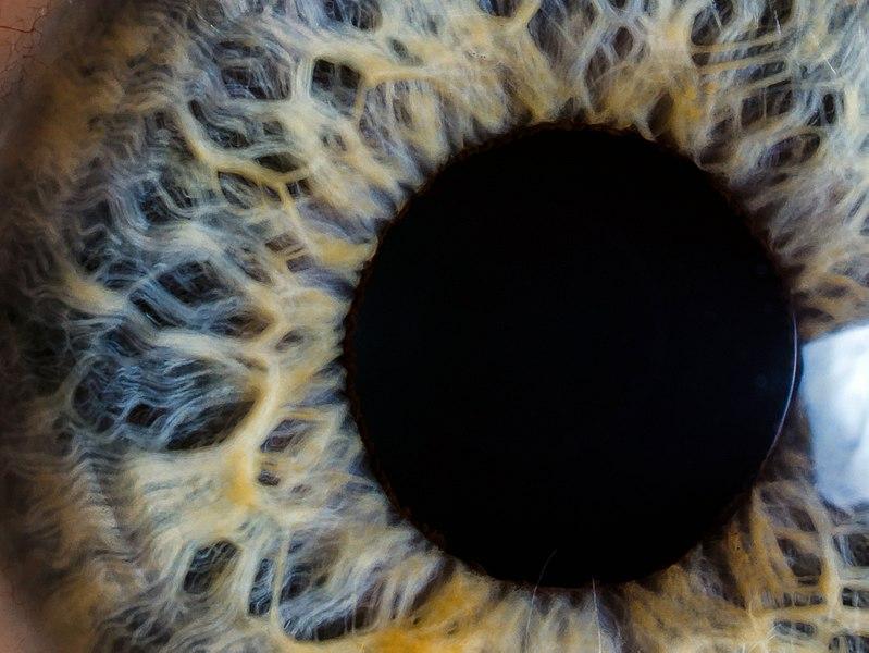 File:Pupil - eye.jpg