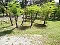 Putrajaya's Botanical Garden 13.jpg