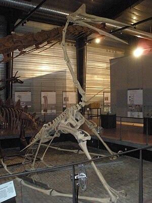 fossil of Quetzalcoatlus, an extinct pterosaur
