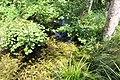 Réserve naturelle Marais Lavours Aignoz Ceyzérieu 34.jpg