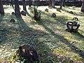 Rõngasristid Vormsi kalmistul.jpg