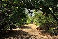 RLZ Beeri HaBanim Grove 07.JPG