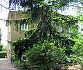 Villa Carl Bear