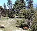Ranch Near Mt. Shasta, CA 1976 (6323212805).jpg