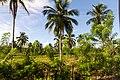 Rancho Español 32000, Dominican Republic - panoramio (4).jpg