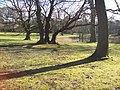 Reemtsma-Park (2).jpg