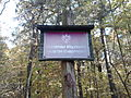 Rezerwat przyrody Dęby w Meszczach 201012 12.11.jpg