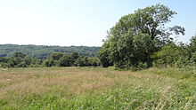Riddlesdown pasture area 2.JPG