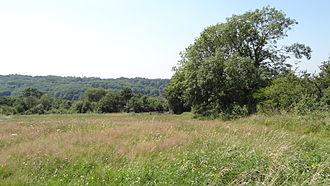 Riddlesdown Common - Image: Riddlesdown pasture area 2