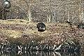 River Otter - Flickr - GregTheBusker.jpg