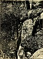 Rock-climbing in the English Lake District (1900) (14754453106).jpg