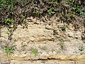 Rock Exposure on the Seale Road - geograph.org.uk - 453698.jpg