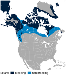 Rock Ptarmigan Lagopus muta distribution in North America map.png