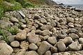 Rocks in Paynter's Cove (7241).jpg