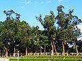 Rongxin Park East Wetland Side Walkway.jpg