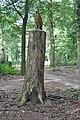 Roofvogel Voordaan Groenekan.jpg