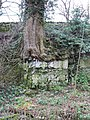Rooted in limestone - geograph.org.uk - 700709.jpg