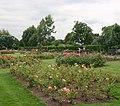 Rose garden, Chalkwell Park - geograph.org.uk - 1995201.jpg