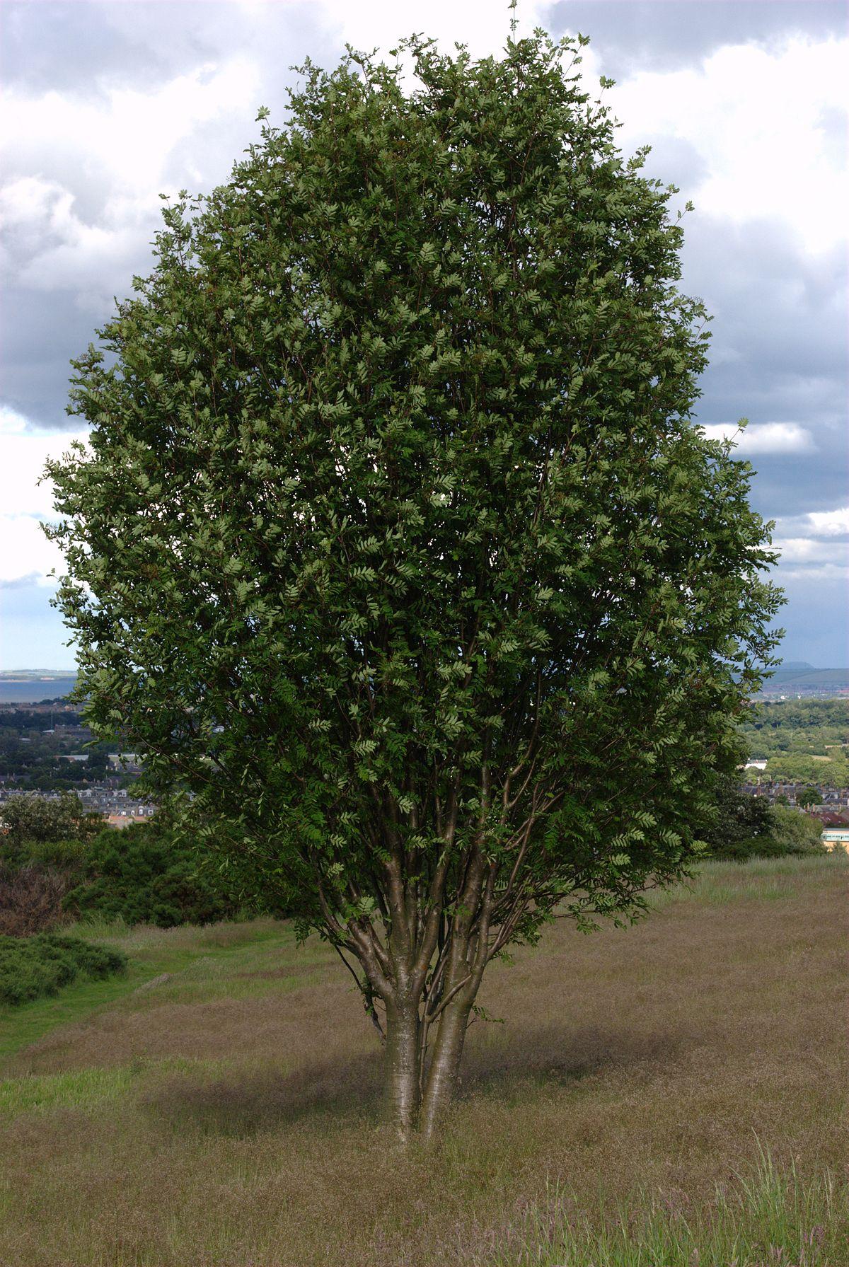 Эссе по обществознанию 8 класс кронами других деревьев