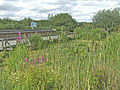 Rye Meads Nature Reserve - geograph.org.uk - 199214.jpg