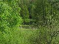 Rzeka Wda na wysokości cmentarza.JPG