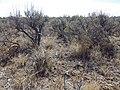 Sagebrush steppe near Magic Resevoir (9672389857).jpg