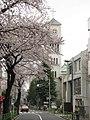 Sakura trees -02.jpg