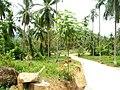 Samui 2013 May - panoramio (12).jpg