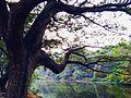 Sanjay Gandhi National Park, Mumbai.jpg