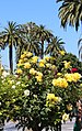 Santa Clara, CA USA - Santa Clara University, Mission Santa Clara de Asis - panoramio (10).jpg