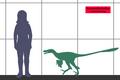 Saurornitholestes SIZE.png
