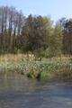 Schlitz Eisenberg NR 165214 Rohrwiesenbachtal und Eisenberg Pond b 05 SO.png