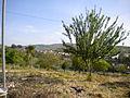Scicli (Sicilia) 2010 073.jpg