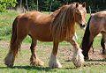 Seana my chestnut mare.jpg