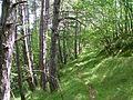 Sentiero per Bocconi - panoramio (3).jpg