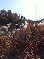 Seoul, Korea (10775180635).jpg