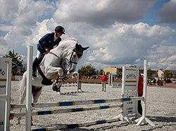 Состоялся «Кубок мэра Новосибирска» по конному спорту